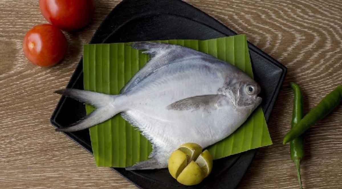 ماهی حلوا سفید دریای جنوب