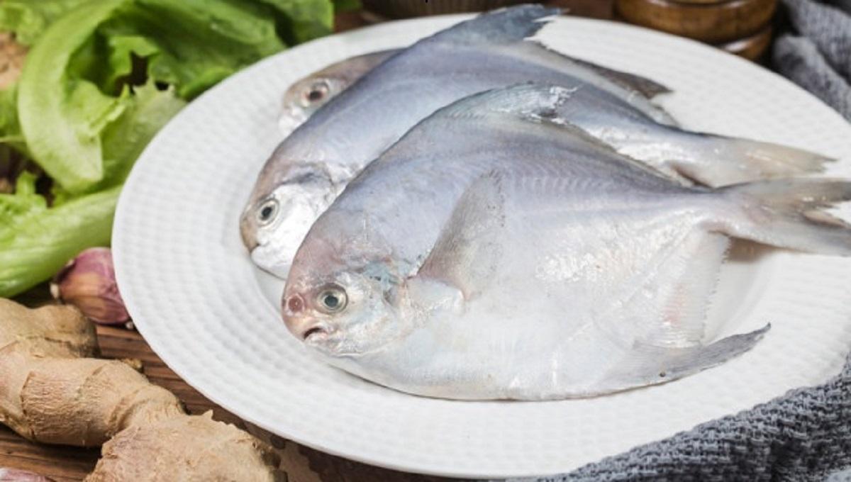 بهترین ماهی جنوب