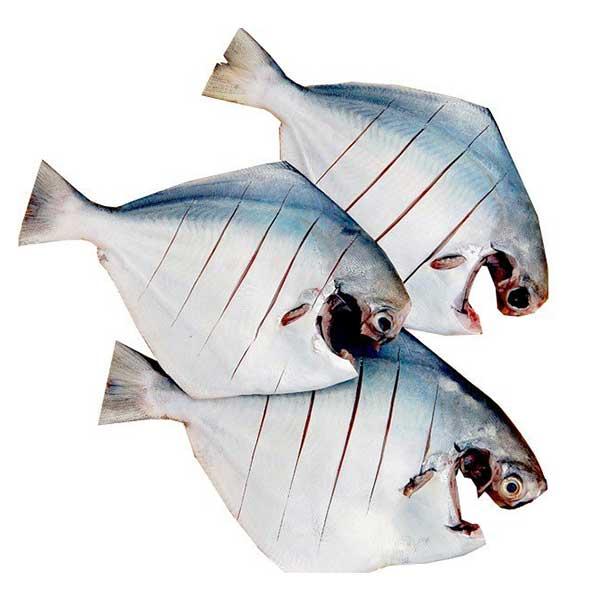 ماهی حلوا سفید پاک شده برای فروش در وبسایت ماهی مشتا