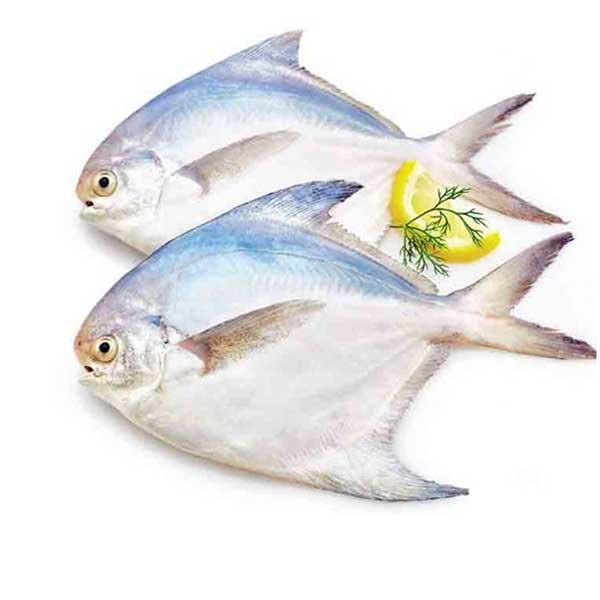 ماهی حلوا سفید پاک نشده