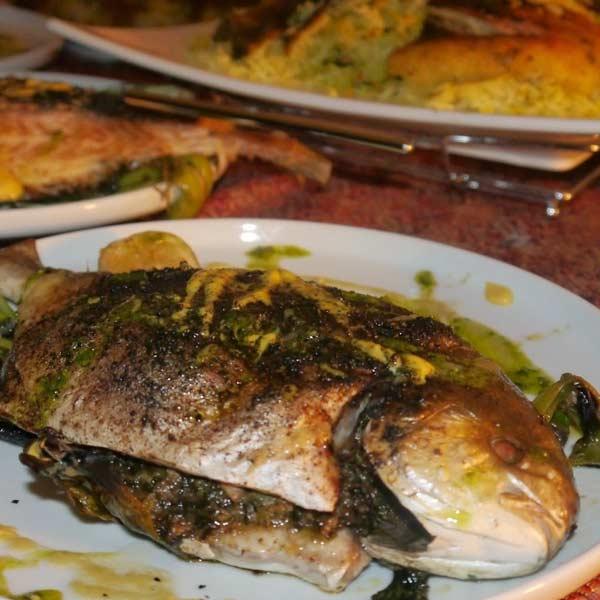 ماهی شکم پر برای وبسایت ماهی مشتا