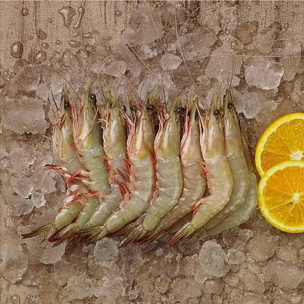 میگو درشت جنوب برای فروش در سایت ماهی مشتا