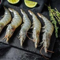 میگو ریز جنوب برای فروش در وبسایت ماهی مشتا