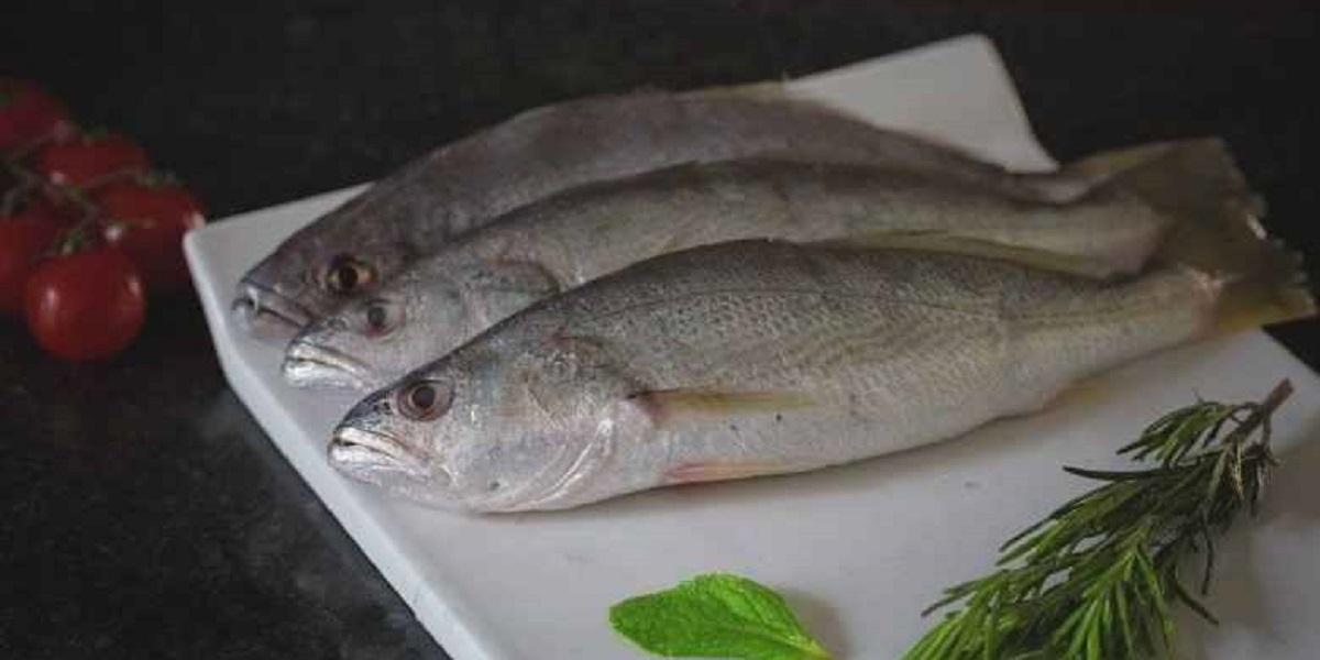 خواص ماهی شوریده جنوب