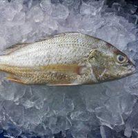 ماهی سنگسر تازه جنوب - %d9%be%d8%a7%da%a9-%d9%86%d8%b4%d8%af%d9%87