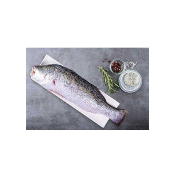 ماهی شانک پاک شده برای فروش در وبسایت ماهی مشتا