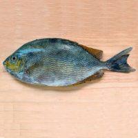 ماهی صافی پاک نشده برای فروش در وبسایت ماهی مشتا