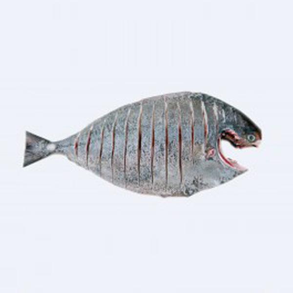 ماهی حلوا سیاه پاک شده برای فروش در وبسایت ماهی مشتا