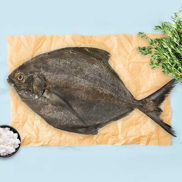 ماهی حلوا سیاه تازه برای فروش در وبسایت ماهی مشتا