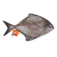ماهی حلوا سیاه تازه جنوب - %d9%be%d8%a7%da%a9-%d9%86%d8%b4%d8%af%d9%87