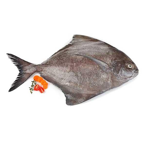 حلوا سیاه پاک نشده برای فروش در وبسایت ماهی مشتا
