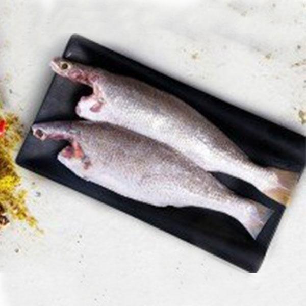 ماهی شوریده پاک شده برای فروش در وبسایت ماهی مشتا