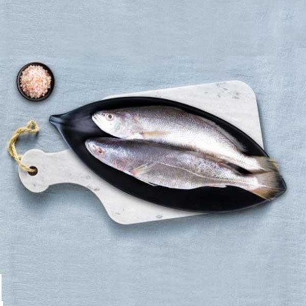 ماهی شوریده پاک نشده برای فروش در وبسایت ماهی مشتا