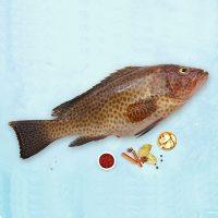 ماهی هامور پاک نشده برای فروش در وبسایت ماهی مشتا