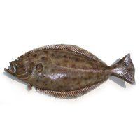 ماهی کفشک تازه جنوب - %d9%be%d8%a7%da%a9-%d9%86%d8%b4%d8%af%d9%87