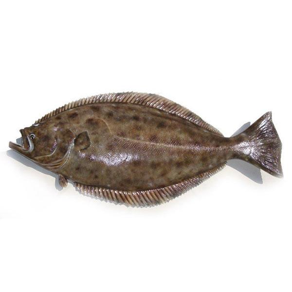 ماهی کفشک تازه پاک نشده برای فروش در وبسایت ماهی مشتا