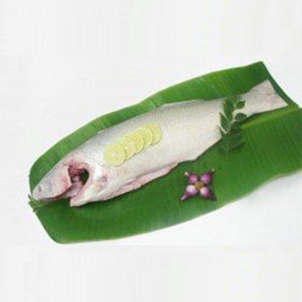 ماهی راشگو پاک شده برای فروش در وبسایت ماهی مشتا