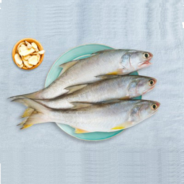 ماهی راشگو تازه جنوب برای فروش در وبسایت ماهی مشتا