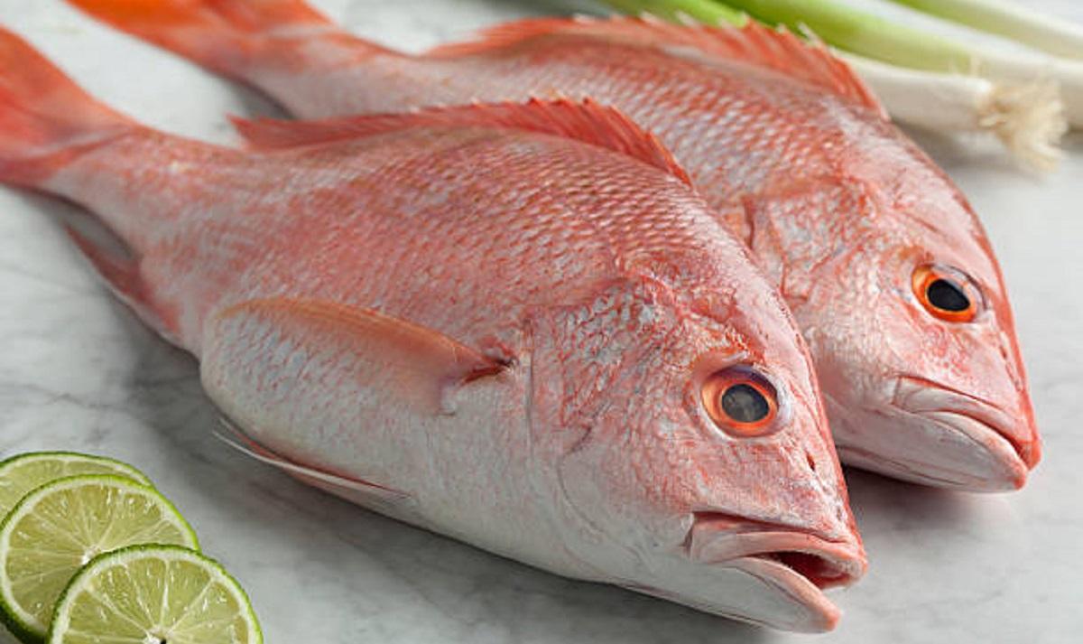ماهی سرخوی تازه و خوشمزه جنوب