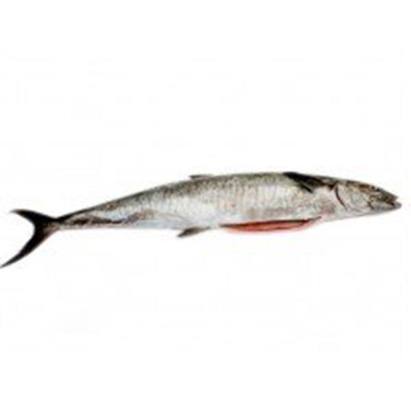 ماهی قباد پاک شده برای فروش در وبسایت ماهی مشتا
