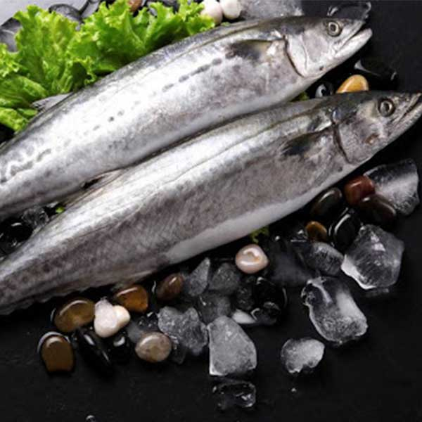 ماهی قباد پاک نشده برای فروش در وبسایت ماهی مشتا
