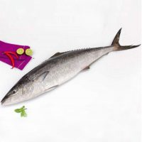 ماهی شیر پاک نشده برای فروش در وبسایت ماهی مشتا