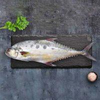 ماهی مقوا سلیمانی پاک نشده برای فروش در وبسایت ماهی مشتا