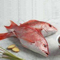 ماهی سرخو برای فروش در وبسایت ماهی مشتا