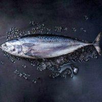 ماهی تن، ماهی هوور برای فروش در وبسایت ماهی مشتا