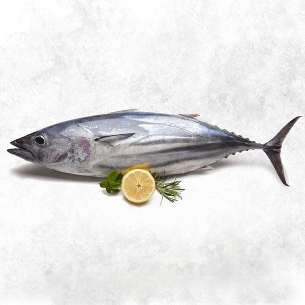 ماهی تن پاک نشده برای فروش در وبسایت ماهی مشتا