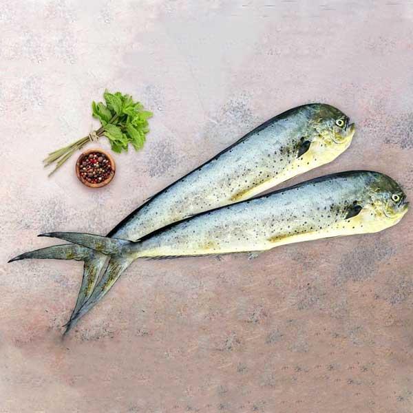 ماهی گالیت پاک نشده برای فروش در وبسایت ماهی مشتا