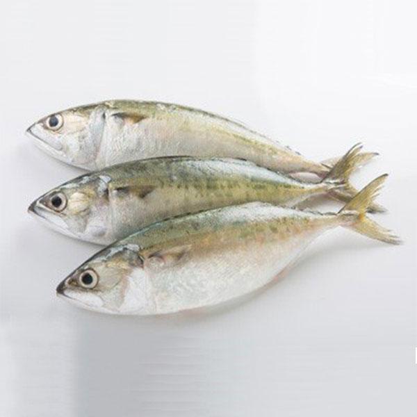 ماهی طلال پاک نشده برای فروش در وبسایت ماهی مشتا