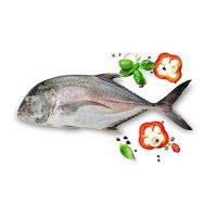 ماهی مقوا سفید تازه جنوب - %d9%be%d8%a7%da%a9-%d9%86%d8%b4%d8%af%d9%87