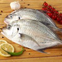 ماهی مقوا پاک نشده برای فروش در وبسایت ماهی مشتا