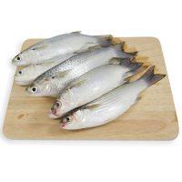 ماهی گاریز پاک نشده برای فروش در وبسایت ماهی مشتا