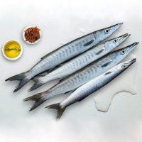 کوتر پاک نشده برای فروش در وبسایت ماهی مشتا