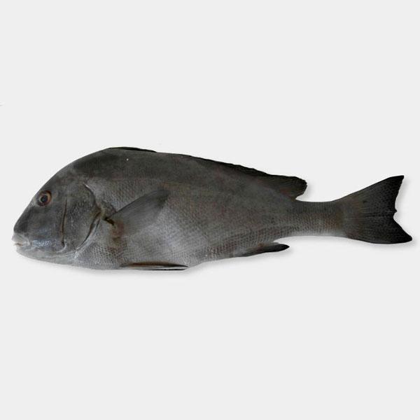 ماهی خنو پاک نشده برای فروش در وبسایت ماهی مشتا
