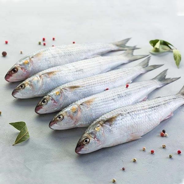 ماهی بیاح پاک نشده برای فروش در وبسایت ماهی مشتا