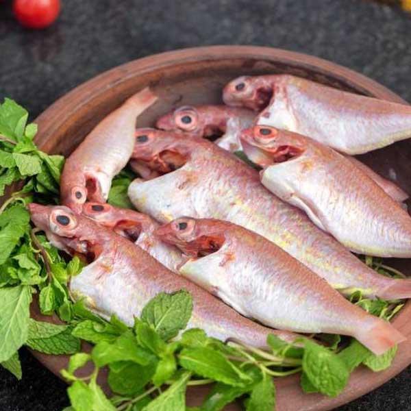 ماهی سلطان ابراهیم پاک شده برای فروش در وبسایت ماهی مشتا