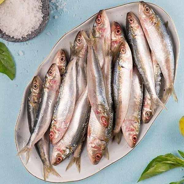 ماهی ساردین پاک نشده برای فروش در وبسایت ماهی مشتا