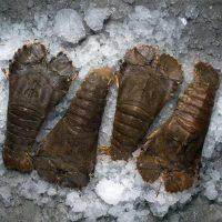 لابستر کله پهن برای فروش در وبسایت ماهی مشتا