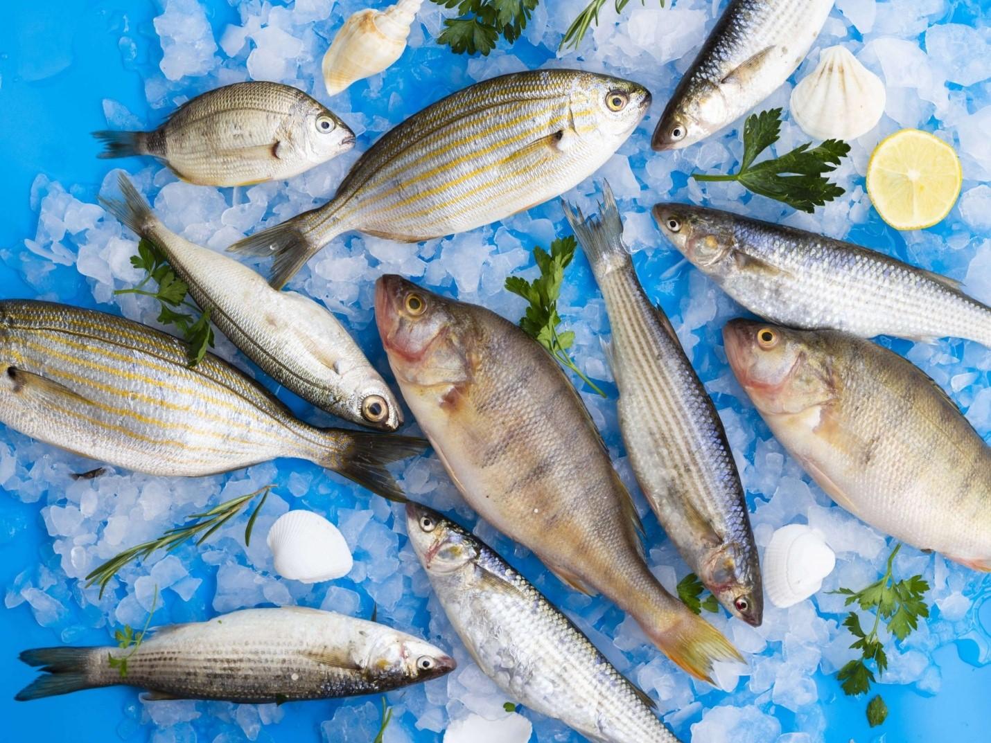 فروش ماهی جنوب در تهران
