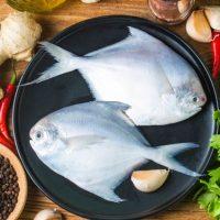 طرز تهیه ماهی زبیدی (حلوای سفید جنوب) با دو روش عالی