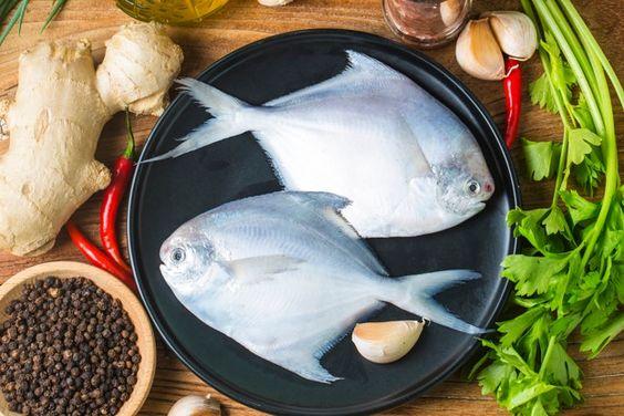 ماهی زبیدی شکم پر و سرخ شده برای سایت ماهی مشتا