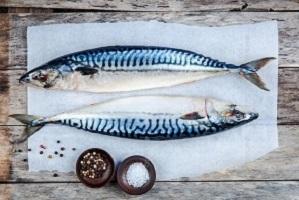 ماهی شیر و خواص آن برای بخش آموزش سایت ماهی مشتا