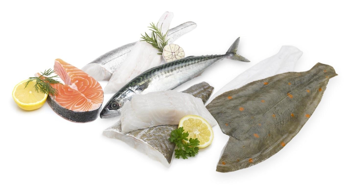 راهنمای جامع خرید ماهی تازه جنوب