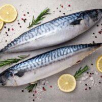 پخت شیر ماهی جنوب به بهترین روش