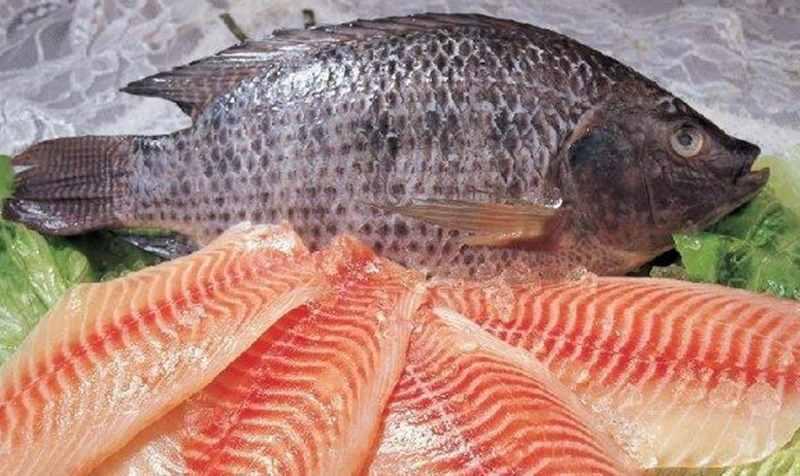 ماهیهای کم تیغ کداماند؟