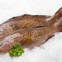 6 دستور طلایی پخت ماهی هامور جنوب