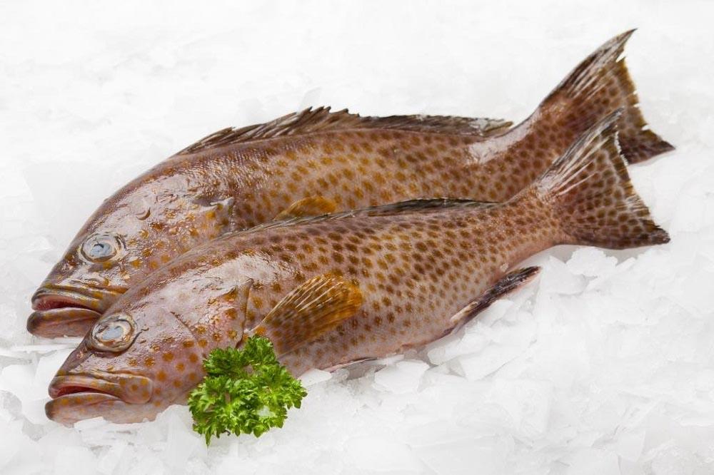 طرز پخت ماهی هامور جنوب کشور